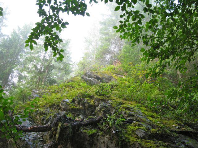 Hiking Up Through the Fog